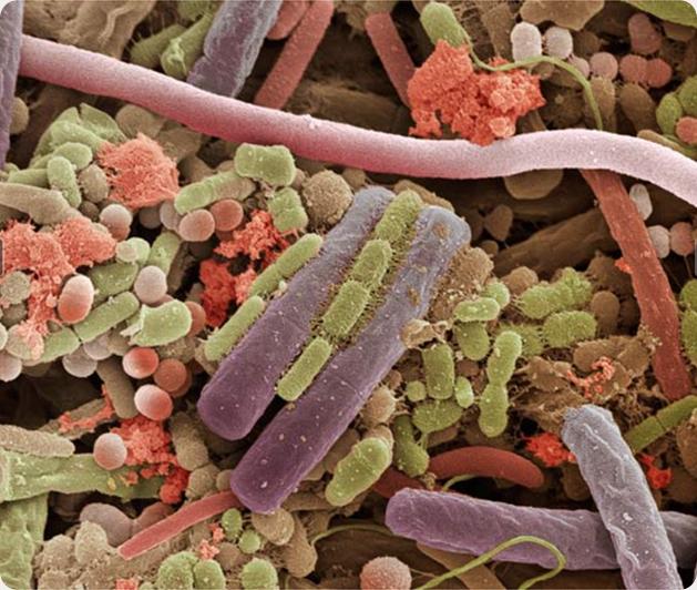 Microcosmes : Images D'insectes, D'articles Ménager Et De