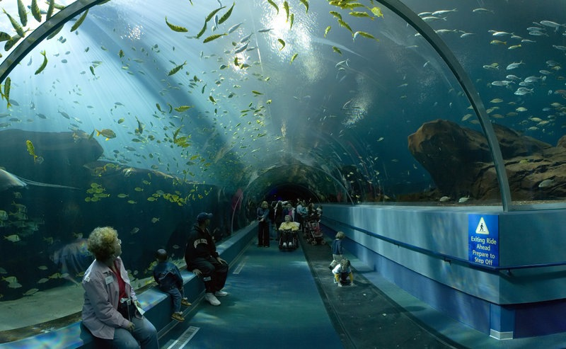 le plus beau aquarium du monde