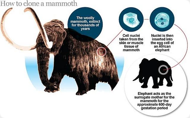 http://www.gurumed.org/wp-content/uploads/2011/01/mammouth-congel_thumb.jpg