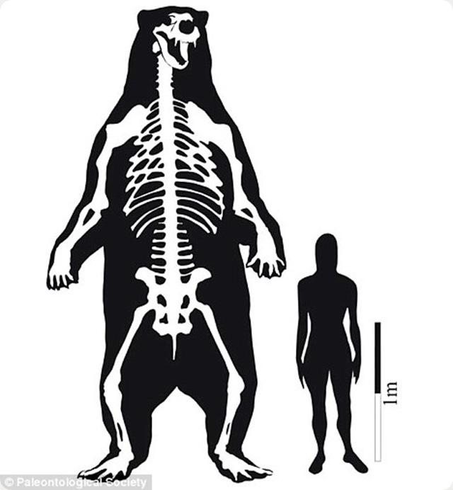 comparason-homme-ourspréhisto
