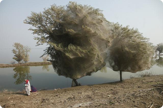 arbre-araignes_thumb.jpg