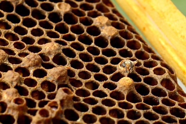 abeille-ruche_thumb.jpg