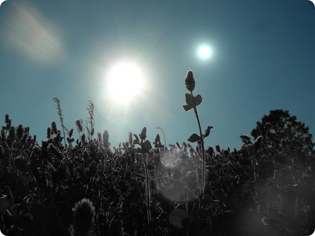 arbres-noirs-plante_thumb.jpg