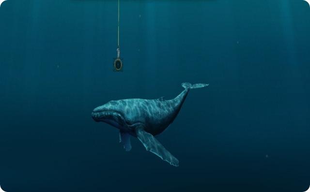Nageur-compositeur : les baleines ont leurs propres tubes qui font le tour du monde.