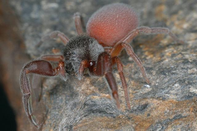http://www.gurumed.org/wp-content/uploads/2011/06/Palpimanus-gibbulus2.jpg