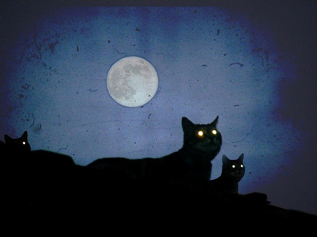 qu elle distance les chats vagabondent gurumeditation. Black Bedroom Furniture Sets. Home Design Ideas