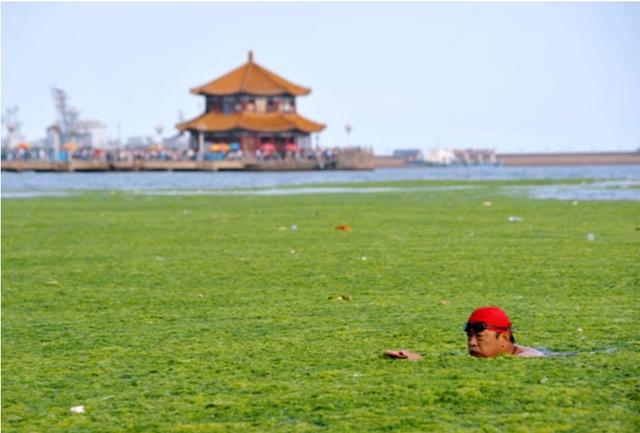 Algues-vertes-Chine_thumb.jpg