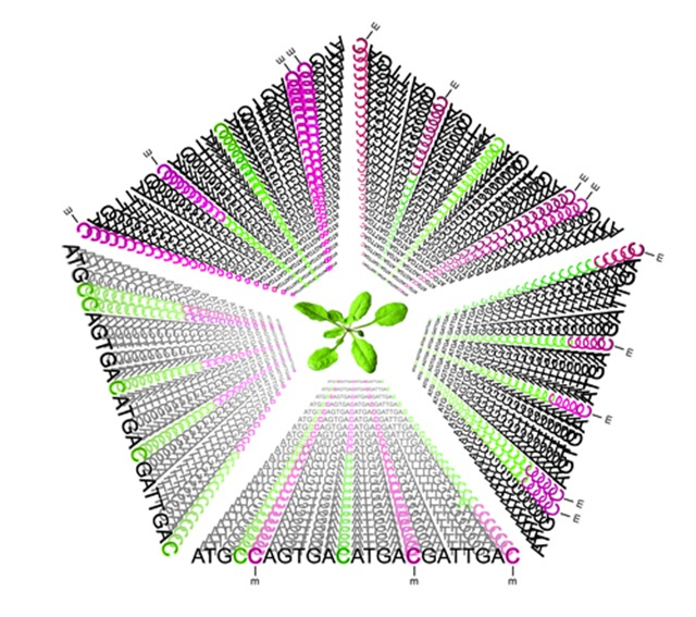 ADN-methylation-Eckerscience