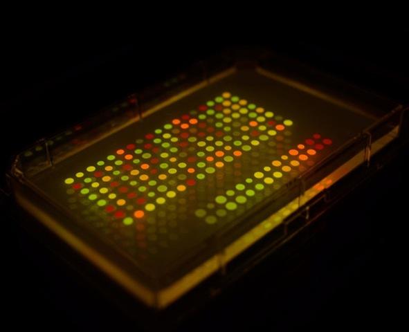 Leur message secret dans des microbes génétiquement modifiés
