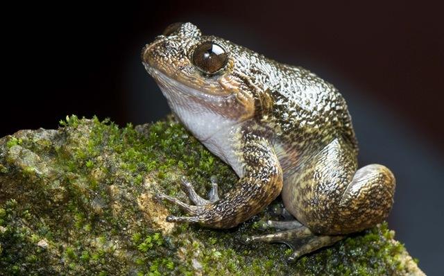 grenouille-nocturne-Gavi_thumb.jpg