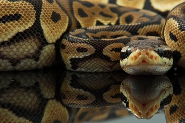 Découverte : pourquoi le cœur du Python peut doubler en taille ?