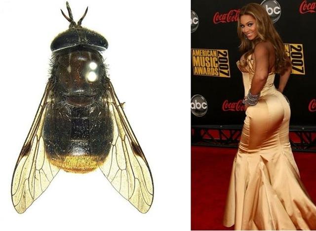 Devinez pourquoi les scientifiques utilisent la terminaison scientifique beyonce pour renommer - Pourquoi les mouches piquent ...