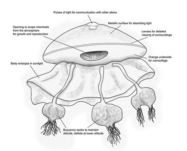 Alien-POCOK