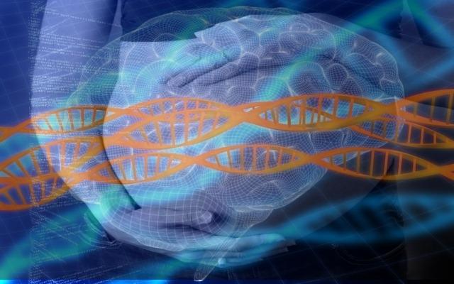 ADN-cerveau-femme