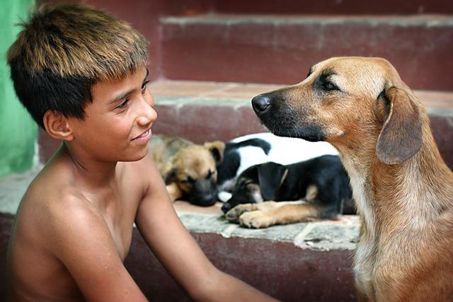 chien-ampathie