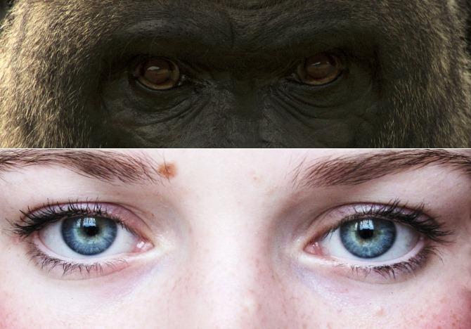 Les masques des flocons davoine pour la peau autour des yeux