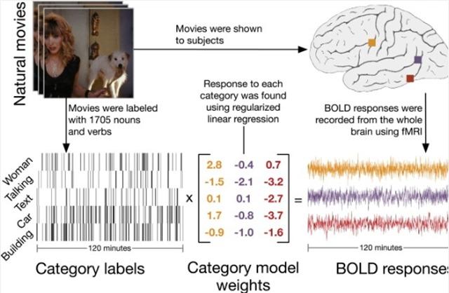 Test-catégorisation-sémantique-cerveau