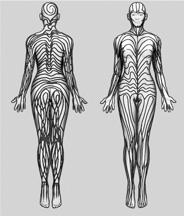 rayures-humaine