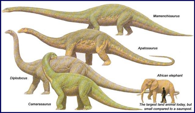 sauropodes3
