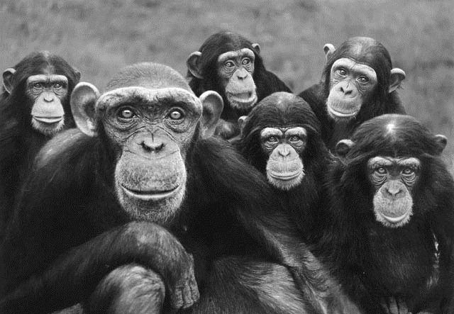 primates-collaboration_thumb.jpg