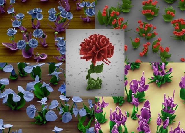 SEM-fleurs-cristaux1