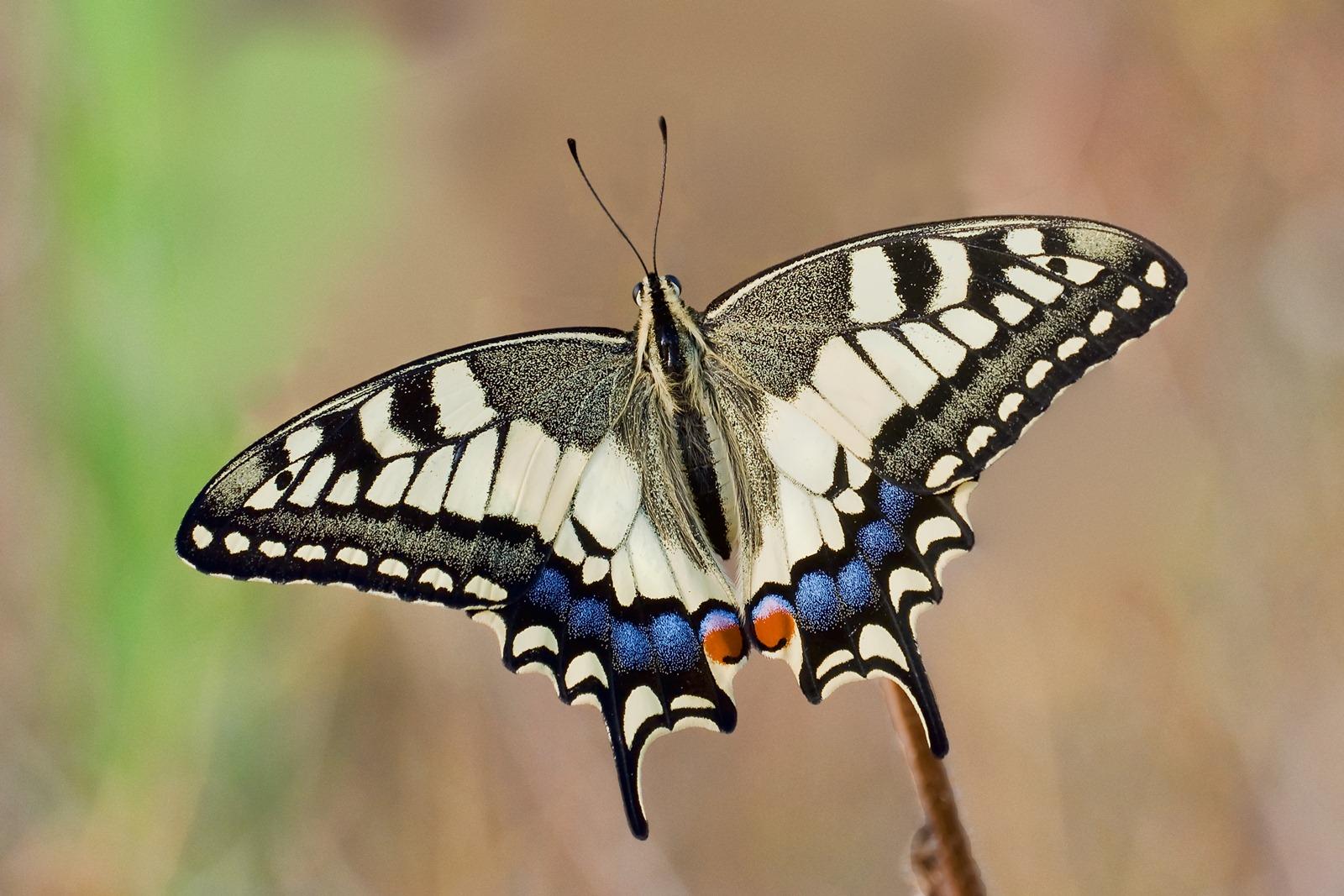 Reconstructions 3d de l int rieur d une chrysalide lors de sa m tamorphose en papillon vid o - Images de papillon ...