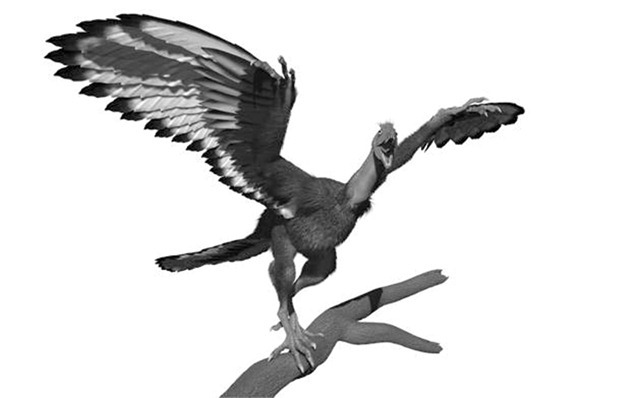 Archaeopteryx-lithographica-2_thumb.jpg