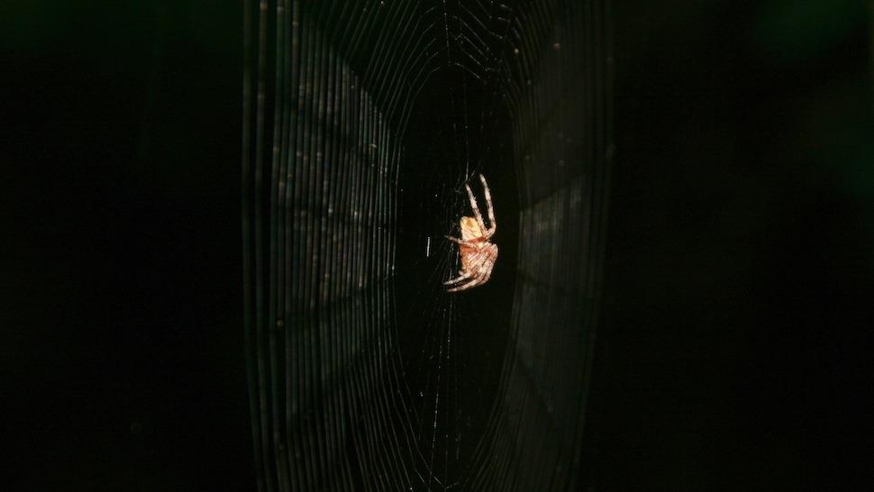 Le pouvoir d'attraction caché de la toile d'araignée (vidéos)