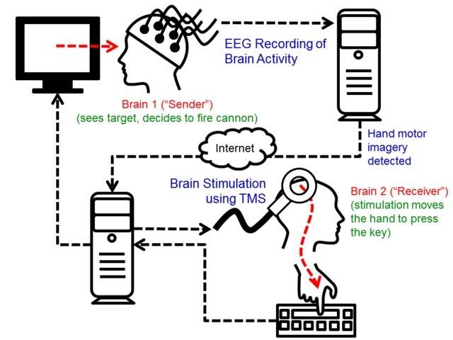 Rajesh Rao-Andrea Stocco_interface-cerceau-cerveau-schéma