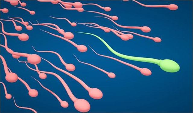 rencontre spermatozoide avec ovule La Roche-sur-Yon