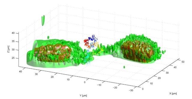 3D-reconstruction-trajectoire-virus-cellule_thumb.jpg