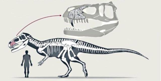 Torvosaurus-gurneyi-3_thumb.jpg