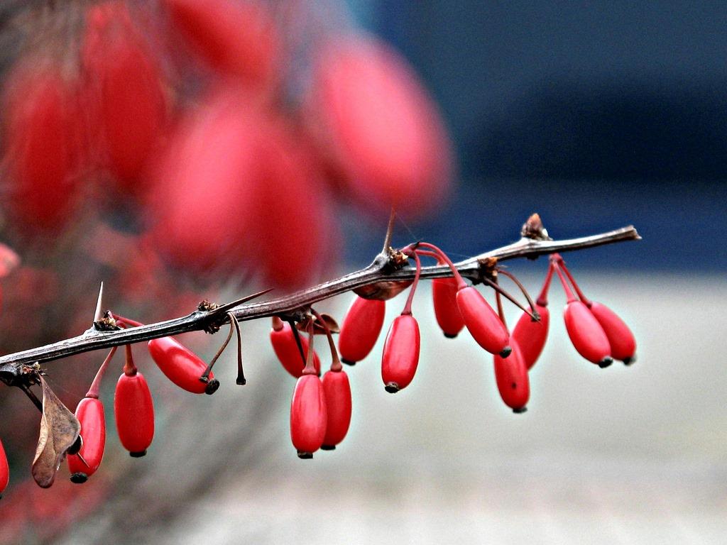 Cet arbuste présente une forme de mémoire et anticipe les futurs dangers