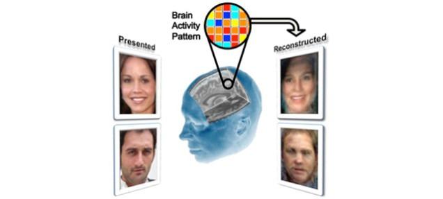 Visage-reconstruction-IRMf.jpg