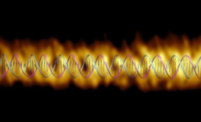 Topographie-segments-ADN2_thumb.jpg