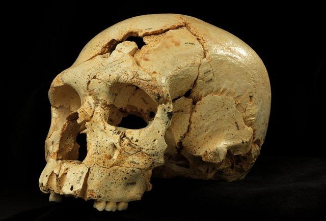 Sima de lose Huesos-crâne