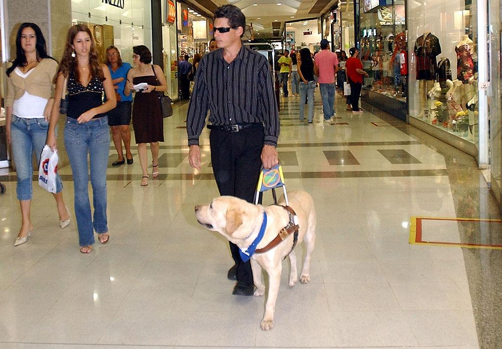 chien-guide.jpg