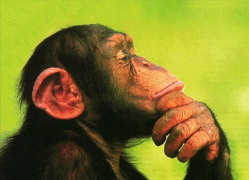 chimpanz5.jpg
