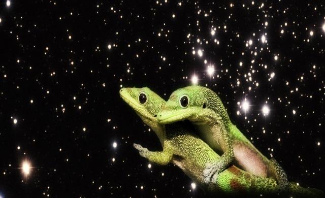 geckos-espace_thumb.jpg