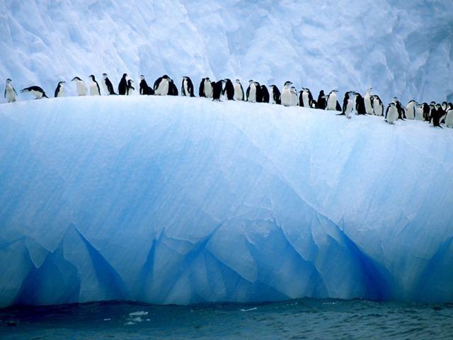 mancho-antarctique1_thumb.jpg
