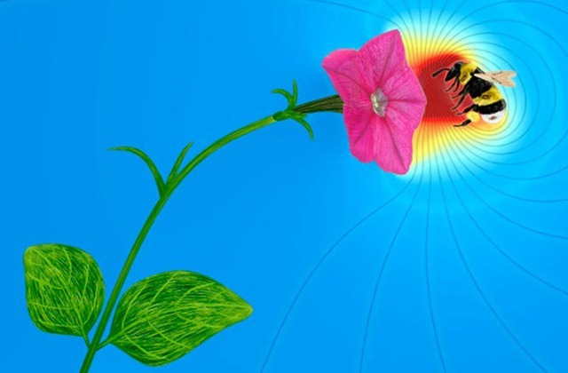 Les fleurs utilisent l'électricité pour communiquer avec les abeilles
