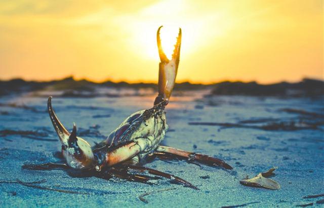 Crabe-douuleur