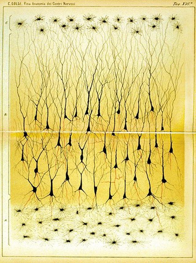 Hippocampe-Golgi-1885