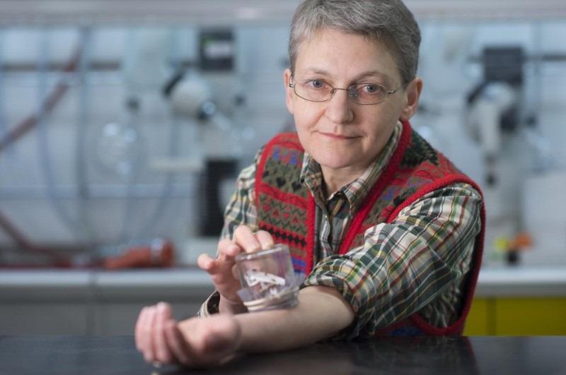 Les champignons selon le moyen de lalimentation peuvent être les parasites