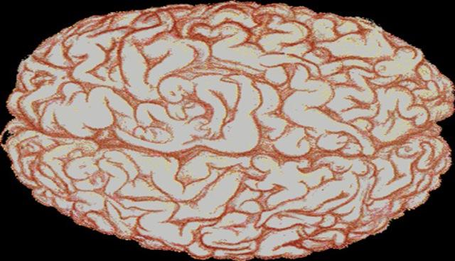 cerveau-sex