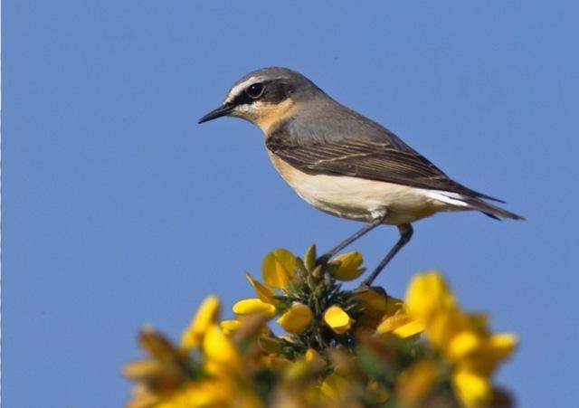 Il vous faudrait faire l aller retour vers mars pour for Petit oiseau avec houpette