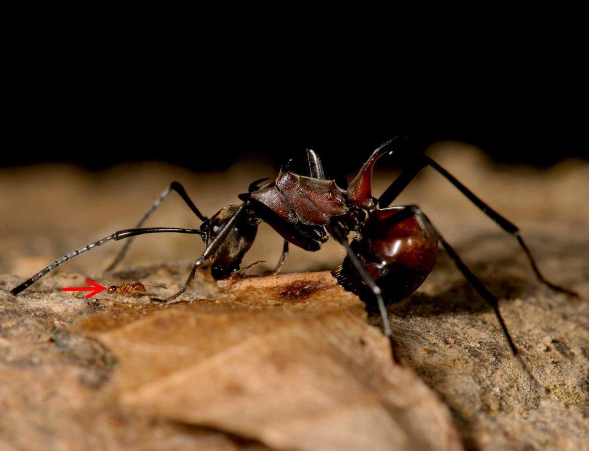 les fourmis cohabitent bien mieux avec des cong n res de tailles diff rentes gurumeditation. Black Bedroom Furniture Sets. Home Design Ideas