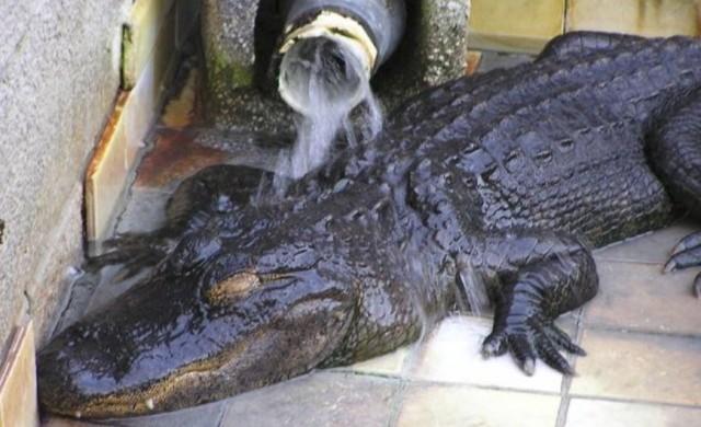 crocodile-jeu3.jpg