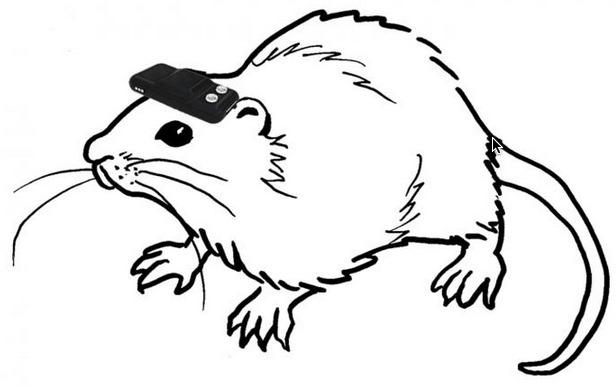 rat-boussole.jpg