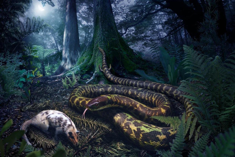 L'ancêtre des serpents aurait eu deux petites pattes arrières